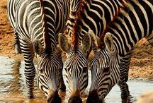 My Africa / by Retha Venter