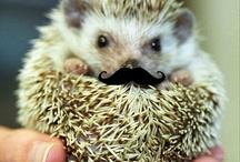 Hedgehogs / by JuiceARollOfCandy