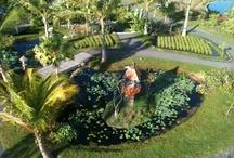 Asian Garden / by Naples Botanical Garden