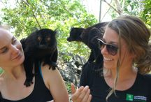Volunteer in Madagascar / International Volunteer HQ (IVHQ) offers a wide range of projects for volunteer travelers in Madagascar, including Wildlife and Marine Conservation, Teaching and Construction / by International Volunteer HQ