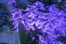 Flowers/Nature / by Heather Eilderts