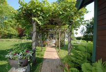 Arbor and Pergola / by Melissa @ Back Roads Revival