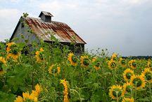 Barns / by Shannon Martin