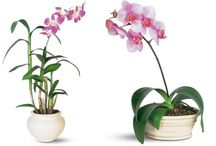 Plants That Clean Your Air / plants that do double duty / by Inhabitat