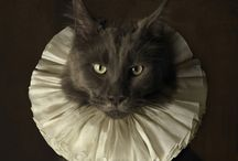 Clothed Cats / by Cassandra Considers
