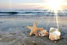 Beach & Ocean Life / by Rachel Simmons DeBoard
