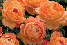Roses and Hydrangeas / by Erba Gartin