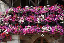 Container Gardening ♥ / by Inspired...