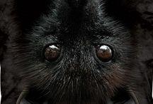 Bat LoVe / by Primitive Hare Isobel-Argante