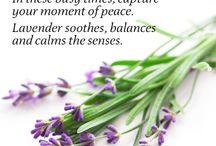 Wonderful Massage / by Garden Gables Inn
