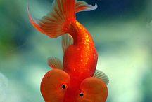SOMETHING FISHY! / by Deb Portman