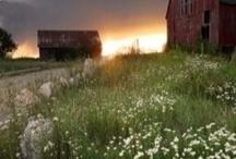 Barns / Barns / by Nancy Miller