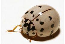 Ladybug, Ladybug / by Lori Mason
