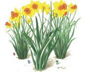 Gardening Tips / by Fine Gardening