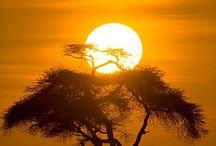 Afrika / Mein großes, geliebtes, Afrika / by Christiane
