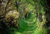 Pathways / by Jeannie Sorel