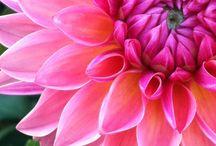 Flowers / by Colleayn Klaibourne