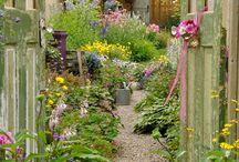 garden / by Chomkhwan Plank