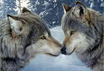 wolves. / by Audra Fritz Light