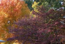 Neighborhood / Fall color / by Linda Belcher