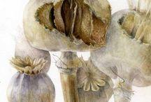 Botanicals / by Susan Gendron Huotari