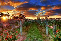 Heaven and Nature / by Debbie Morton-Copelin