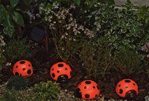 Ladybugs.  / by Traci McMahan