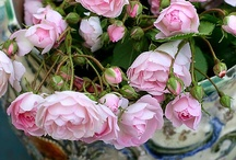 """A Rose By Any Other Name Would  Smell As Sweet"" / The Beautiful Rose / by * Lisa *"