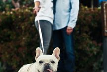 Pets at Weddings / by WeddingPhotoUSA