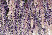 Florals, Garden & House Plants / by Keiko Umeda