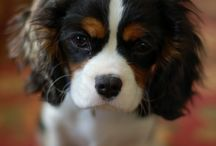 Dogs, puppies, & personal special innovations!!! / Beautiful dog inspiration  / by Karon Bezold