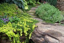 Garden / by Deborah Young