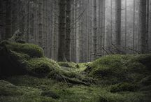 M o o d / / Forest  / by Katy fon Forest