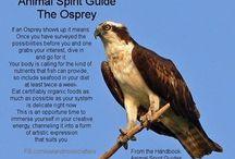 Spirit Guides / by Kristen Conklin