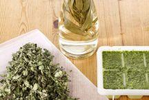 herbs / by Kelly Friedrichsen