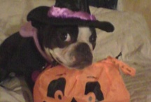 Dog Halloween Photo Contest / by Thrifty Mom's Reviews and More