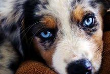 Awe! Puppies :) / by Jacy Gardner