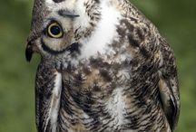 Owls / by Edrie Crisp