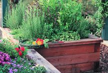 How does your garden grow? / by Caley Mitchell