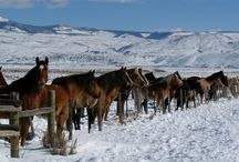 Horseback Riding / by Key To The Rockies Vacation Rentals