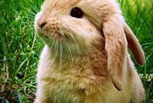 ♥ Bunny Bunny Bunny ♥ / by Anna Puspa