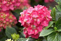Garden-Flowers / by Linda L Doyle