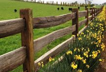 Fences / by Theda Weatherly