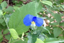 Flowers In My Garden / by Leah Schulz