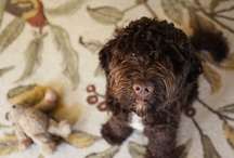 oh henry, the pup / by VintageMixer