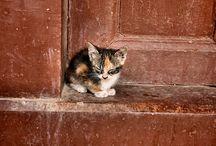 Cute furry things ~ / by Jan Balzer (Juliano)