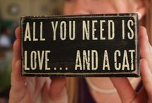 ALL YOU NEED IS LOVE...AND A CAT / by Susan Bay