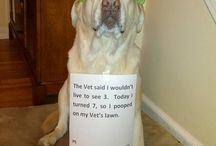 Funny! / by Alexa Murtha