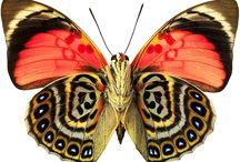 borboletas / by Georgete Keszler Chait