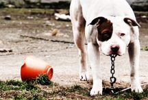 Causes for the Dogs / by Fence Workshop™